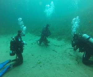 Gulf Coast Divers